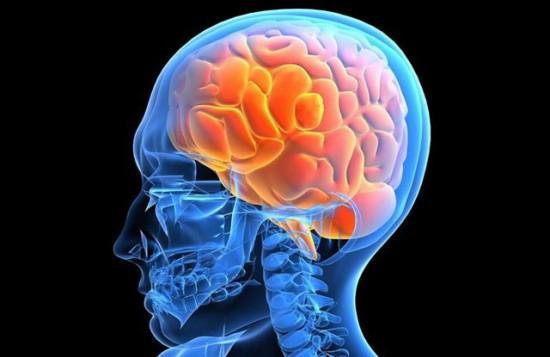 череп-и-мозг-рисунок
